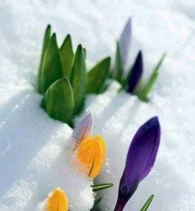 КУЛТУРА ВСЕКИ ДЕН Честит първи март!